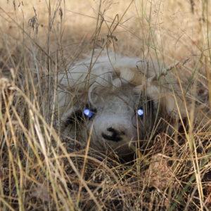 ein gefilztes Schaf mit einer blonden Perücke als Fell, zwei hellen Hörnern und blau-leuchtenden LEDs als Augen